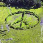 Peace Sign made from trees North of Lakeland 10/19/16