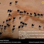 National Geo-Graphic Camel shadows from satellite